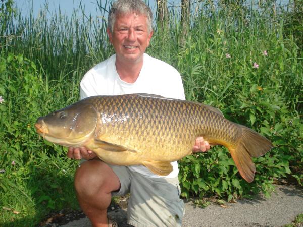 Freshwater carp - photo#25