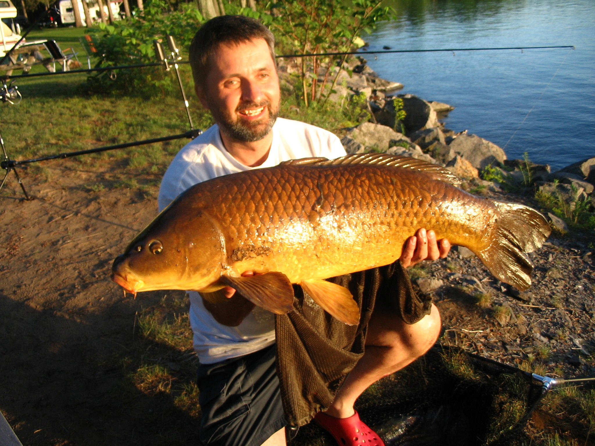 Ontario carp fishing how to fish for carp in ontario canada for Carp fish pictures